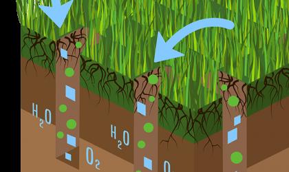 Fall Lawn Fertilizer & winterization