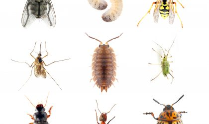 "Lawn insect identification. Insects and diseases can do more than ""bug"" you....they can devastate your lawn. Mosquitoes, ticks, and fleas can ruin your cherished time with family and friends. Lawn pest control protects your kids & pets from fire ants, fleas and grubs."