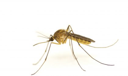 mosquitos and pests can ruin family outings