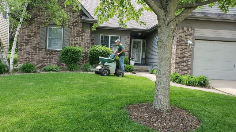 Early summer is when your lawn is growing fastest. Regular mowing is critical to encourage the growth of side shoots.