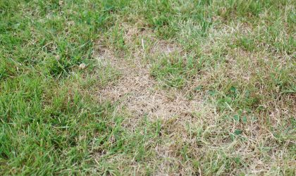 How to keep lawn green in summer heat. 10 tips for Surviving the August drought in NWI