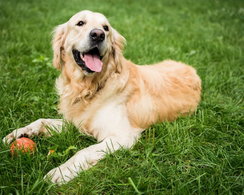 The family or neighbor's dog can cause dead spots on a lawn. Flush the area with water to dilute the urine in the soil.