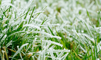 The secret to having a remarkable lawn next year depends on if your grass absorbs and stores nutrients all the way up until the ground freezes.