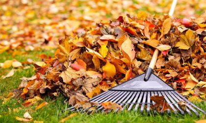 If you don't keep the leaves maintained, you'll have a real issue in the spring. The soggy, decayed leaves will become difficult to remove, but worse, you might find your grass is dead.